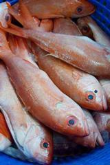 Gandy's Seafood Market in Panama City, Florida