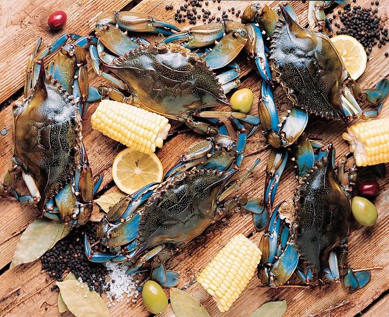 Capt anderson 39 s marina panama city beach attractions for Fish market panama city beach