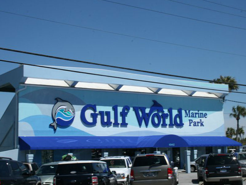 Gulf World Panama City Beach Swim With Dolphins
