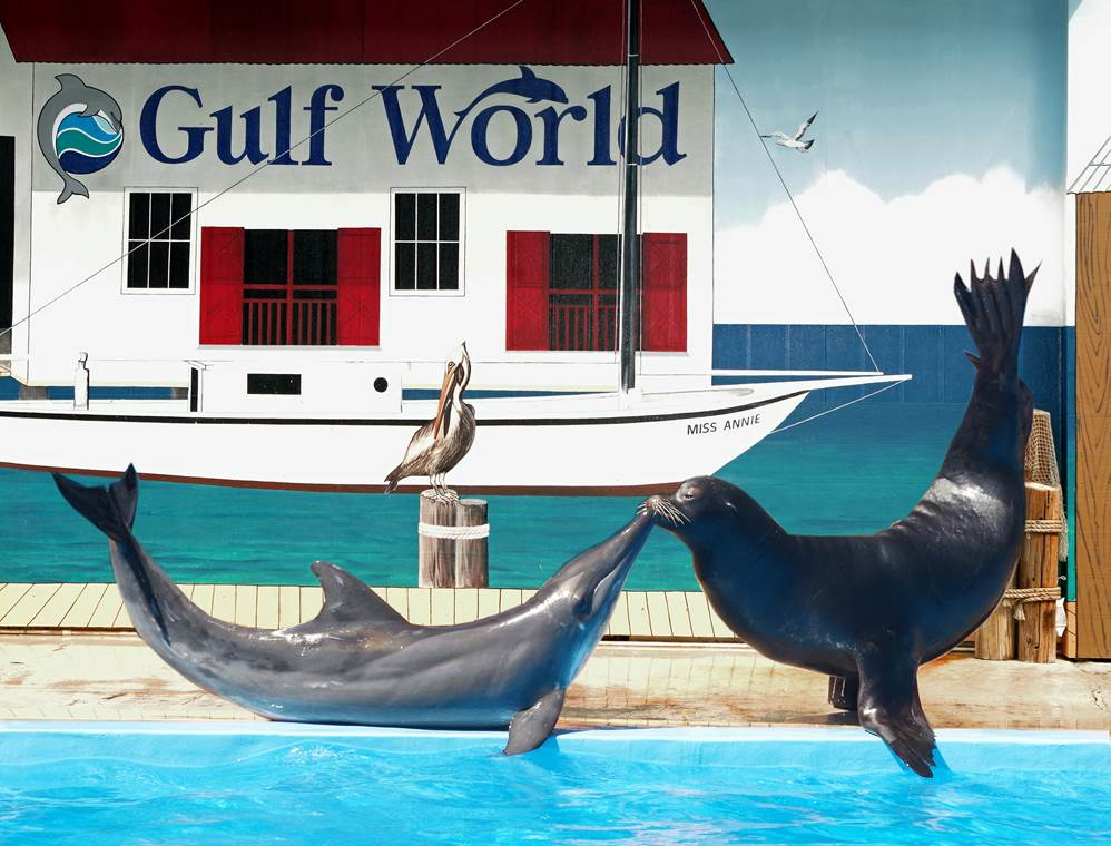 Gulf World Marine Park in Panama City Beach, Florida